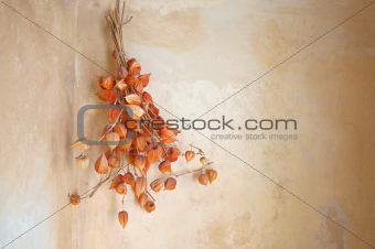 Autumn dry flower