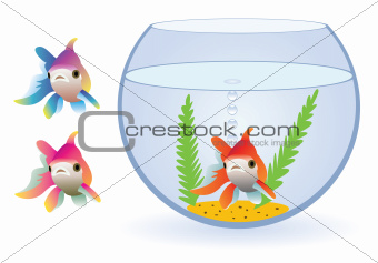 vector aquarium and fishes