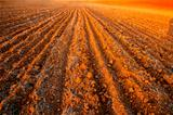 plowed field crops