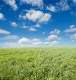 field of grass and cloudy sky