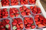 Boxes of fresh strawberries