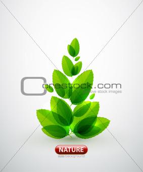 Green leaf summer tree