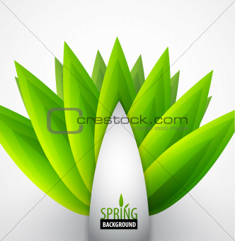 Green leaves spring concept