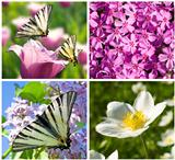 close-up beautiful lilac and white  flowers collage