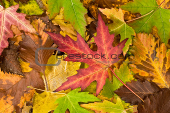 background with falling leaves