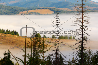 fog in the mountains
