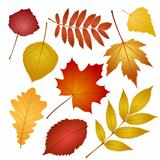 collection beautiful colourful autumn leaves isolated on white background.