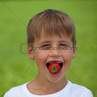 Little boy eating a strawberry