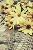 Yellow Flowers - Vintage Look