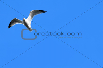 Blue Skies and Seagull