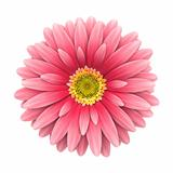 Pink daisy flower isolated on white - 3d render