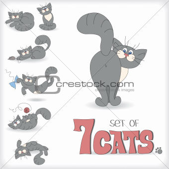 Set of seven playful cats