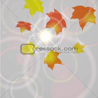 Autumn background with flying leaves