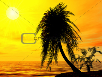 single palm on the uninhabited island on a brightly sunset