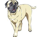 vector sketch portrait of the domestic dog breed Bullmastiff sta