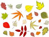 Autumnal colorful leaves