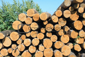 firewood