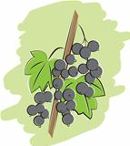 bunch of black currant illustration
