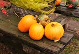 Ripe pumpkins on wooden bench