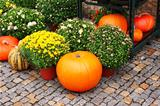 Ripe pumpkins and chrysanthemum