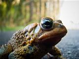 Toad Close-up