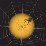 A Spider Web with Spider on moonlight background.