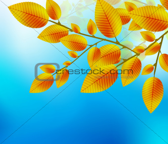 Autumn leaf background