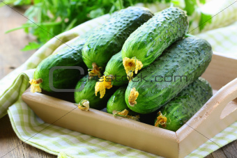 organic fresh vegetable cucumbers on wooden box