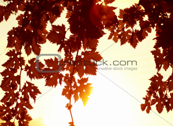 Red leaves border