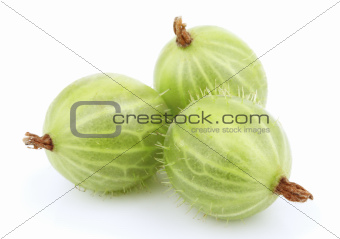 Green gooseberry fruit on white