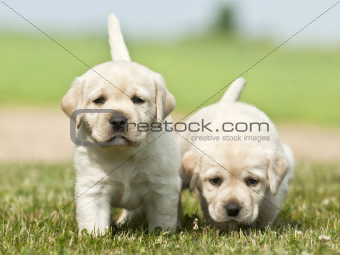 cute puppies