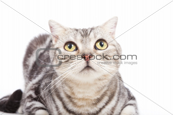 cat looking up on the white background