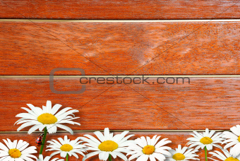 Background with fence and camomiles