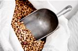 wholesale beans