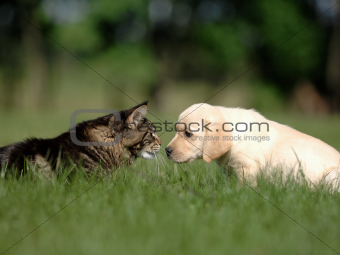 cat and dog friendship PET