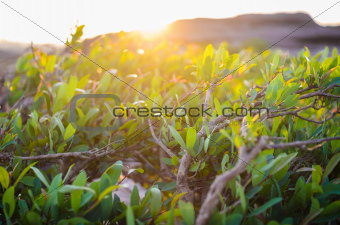 Green plant and sun in the morning