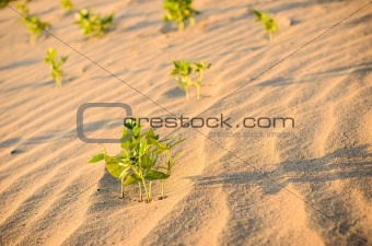 Green plant on the sand and sun
