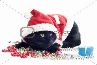 cat Santa Claus