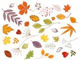 Autumnal leaves and plants
