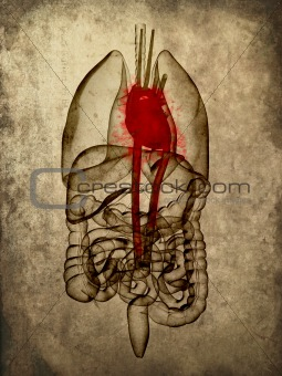 grunge anatomy