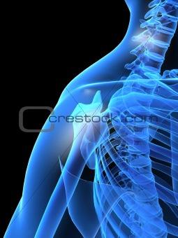 human x-ray shoulder