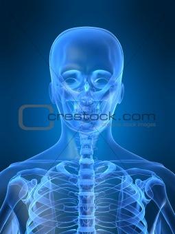 human x-ray head