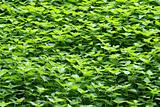 Background of nettles