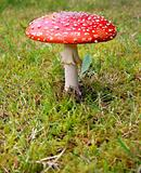 Toadstool