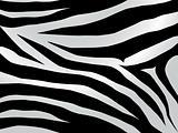 zebra design