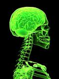 3d brain