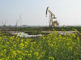 oil rig in wetlands