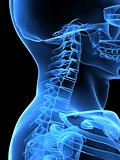 x-ray neck side