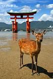 Deer and Shinto gateway