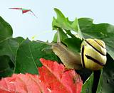 snail on leaves and kite